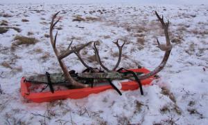 Caribou Game Drag Sled